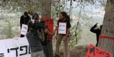 הקמפיין נגד תוכנית ספדי לבניית עשרים אלף יחידות דיור בהרי ירושלים ייחקק במקום של כבוד […]