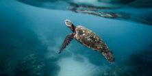 מארגנת קהילתית – קרן תמרי מייל ליצירת קשר – plastic@green.org.il